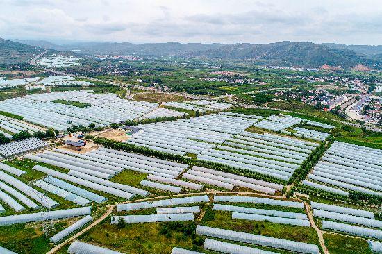 设施蔬菜助力隆德联财镇联合村农民增收