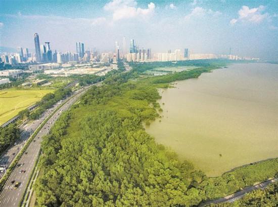 深圳:葱郁红树林 休闲好去处