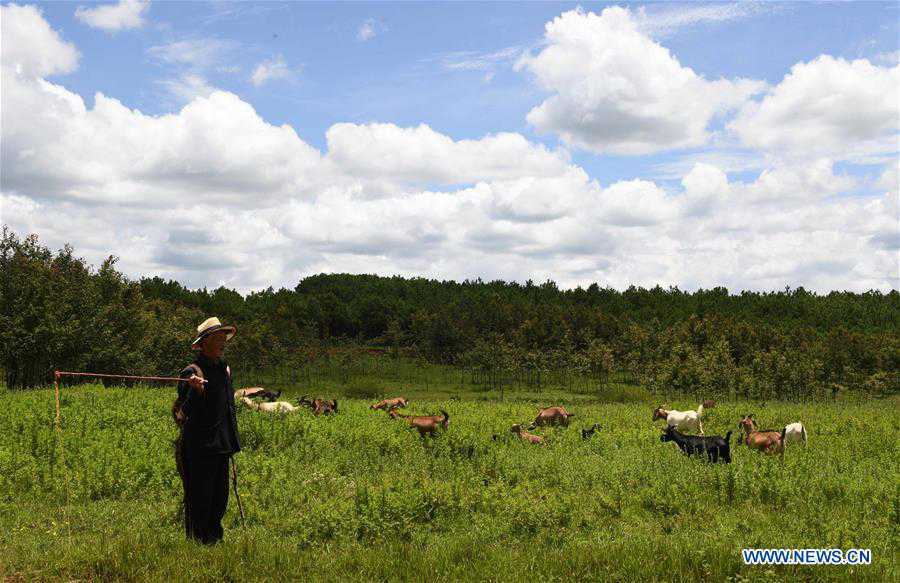 Scenery of Beidaying Grassland in SW China's Yunnan
