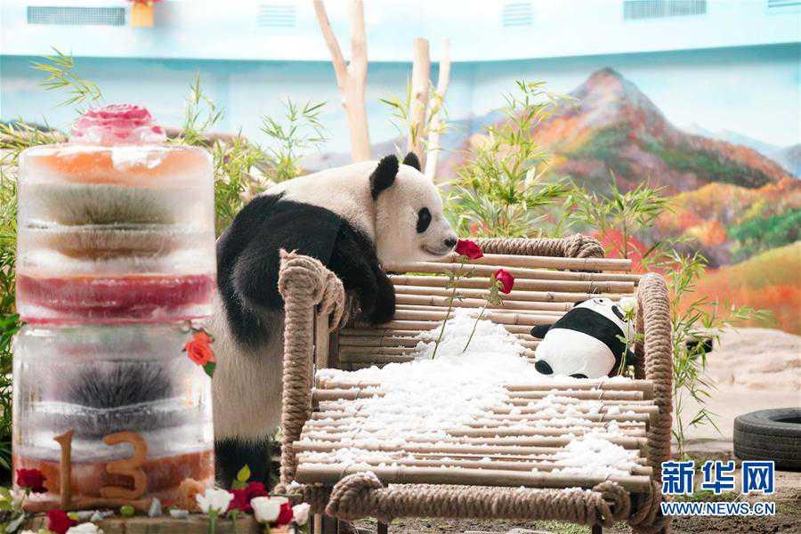 """(社会)(5)大熊猫思嘉的""""生日派对"""""""