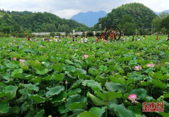 沙县南阳乡举办葡萄文化旅游节