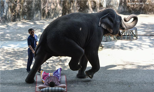 Chinese tourists more wildlife-friendly, reject elephant rides