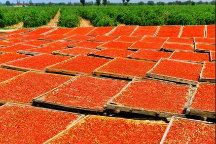 """拼多多联手500农产区上线""""农货节"""",携4亿消费者推动全国尖货上行1474.png"""