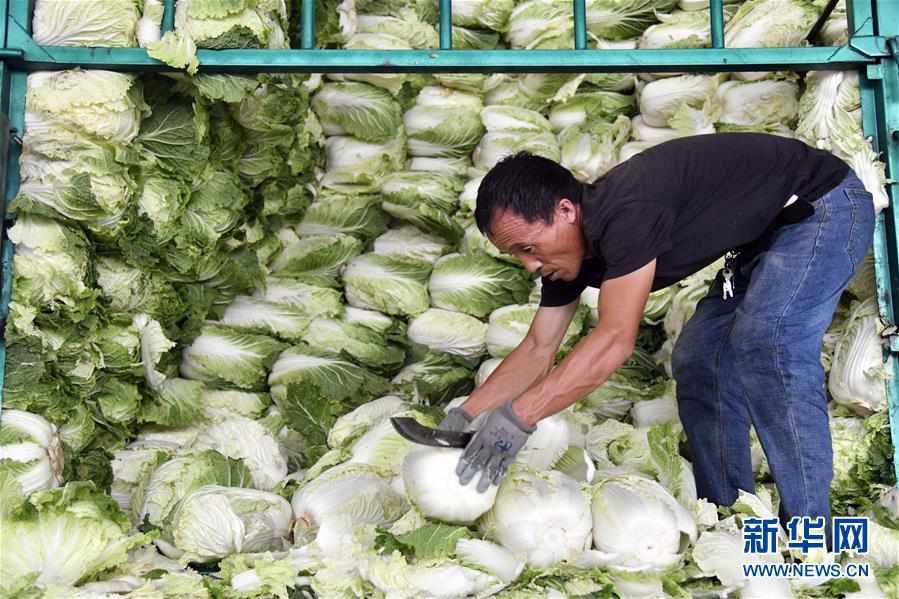 """(关注""""利奇马"""")(1)山东寿光蔬菜供应平稳 价格略涨"""