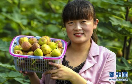 (经济)(2)河北武强:特色果蔬采摘助力乡村振兴