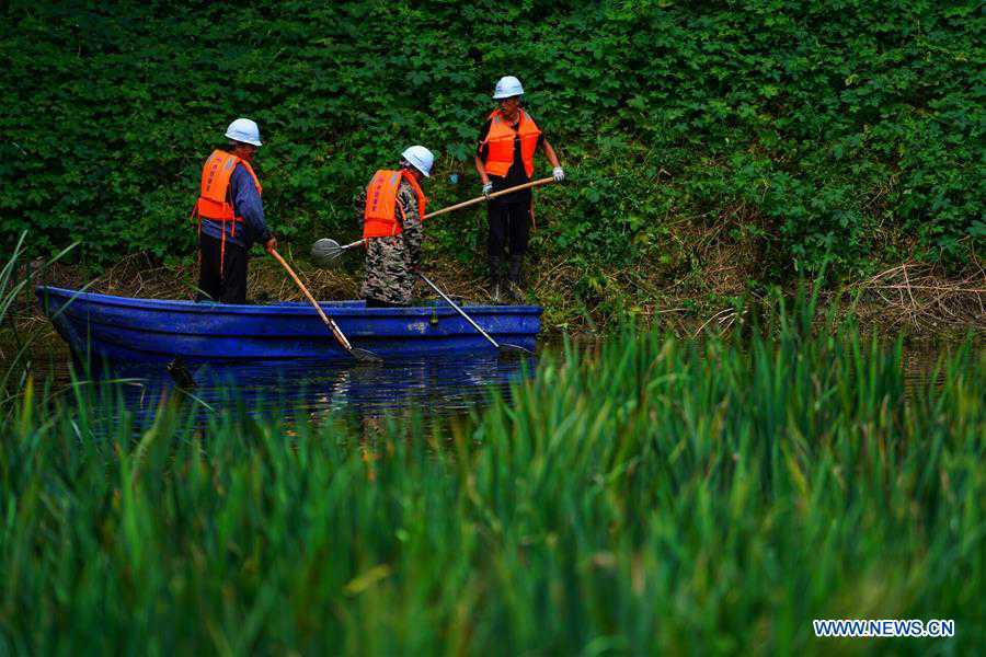In pics: work of cleaning up polluted ponds in China's Xiongan New Area