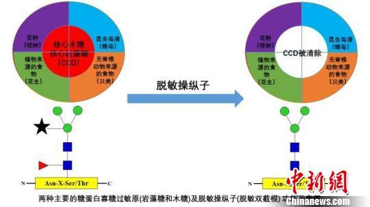 中国学者新发现治疗过敏新途径已申请国家专利保护