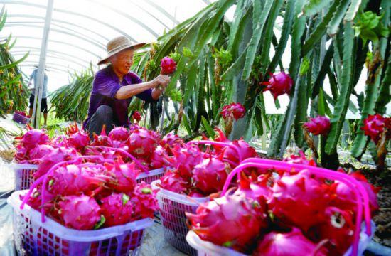 广安岳池:引入新品种新技术发展特色种植业