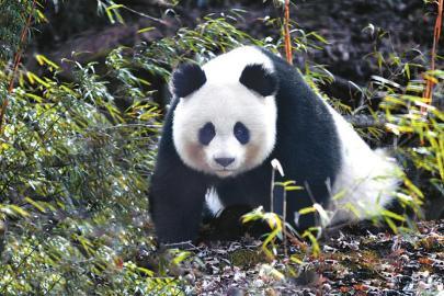 http://www.k2summit.cn/shehuiwanxiang/912443.html