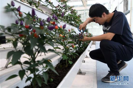 (經濟)(4)甘肅酒泉:戈壁生態農業奏響增收曲