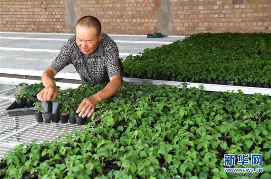 (經濟)(3)甘肅酒泉:戈壁生態農業奏響增收曲