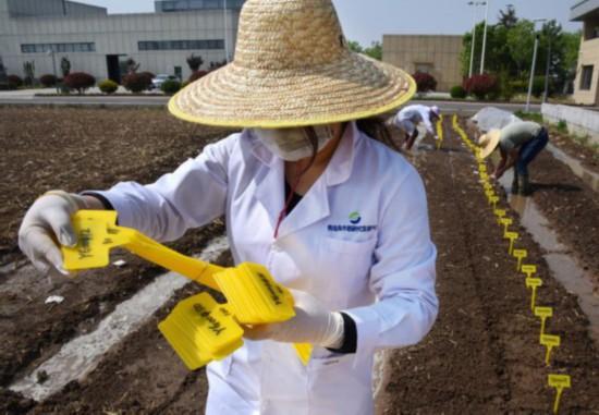 5月9日,青岛海水稻研发中心工作人员在工作。新华社发