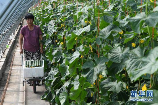 (經濟)(2)甘肅酒泉:戈壁生態農業奏響增收曲