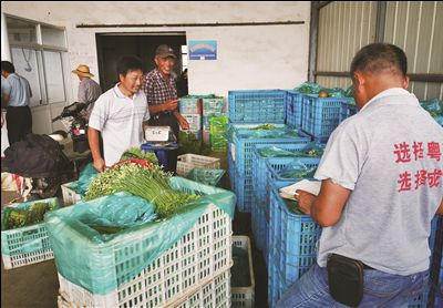 南通海安来南村:药材和蔬菜铺就脱贫路