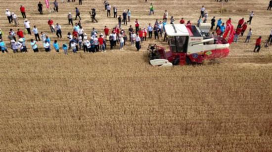 5月31日,在济宁市嘉祥县仲山镇,自动驾驶收割机在田间作业(无人机拍摄)。新华社发