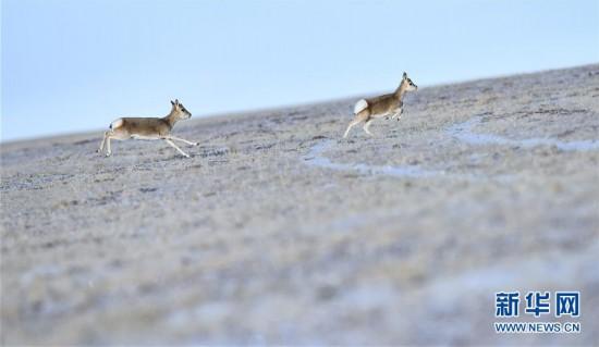 """(今日关注・第一届国家公园论坛・图文互动)(3)首个国家公园什么样?专家带你先""""睹""""为快"""