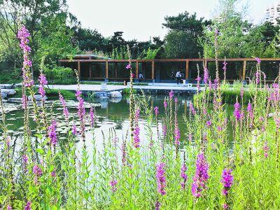 北京:42种植物耐涝性较好 适合在海绵型绿地中种植