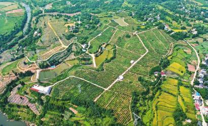 航拍猕猴桃产业园