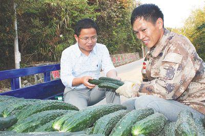 南繁科学技术研究院研究员在那受村帮助脱贫村民收青瓜