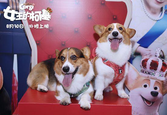 """《女王的柯基》一场充满""""皇家范儿""""的狗狗大冒险"""