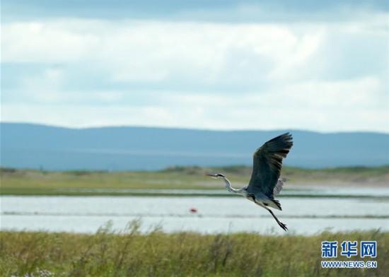 (美丽中国)(6)祖国北疆蓝宝石:呼伦湖