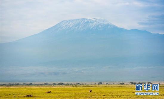 绿色生态肯尼亚欢迎您