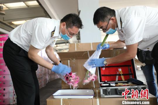 1-8月昆明海关监管出口鲜切花7894吨