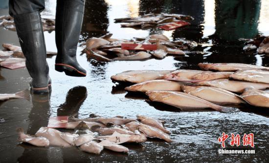 黑帮生意越来越难做日本山口组成员非法捕鱼谋生