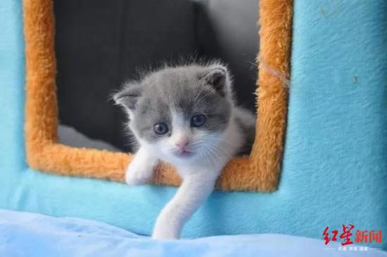 中国初のクローン猫「大蒜」