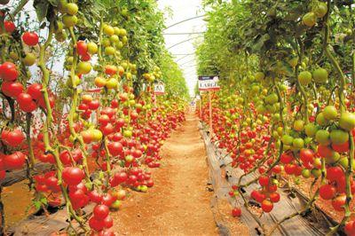 融入一带一路  深化农业合作