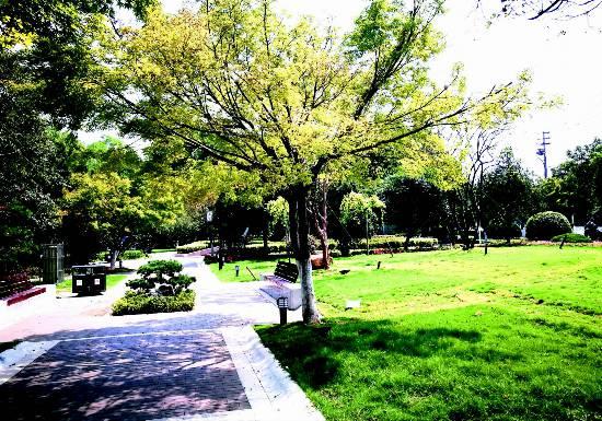 生态沛县绿浓郁 满眼光彩木盎然