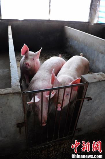 官方:积极稳妥开展生猪活体抵押亚博体育ios官方下载试点