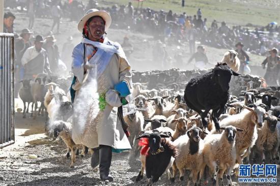 """(文化)(3)西藏""""數羊頭""""傳統活動"""