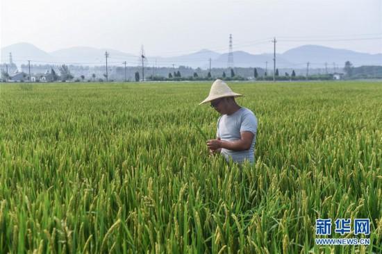 (经济)(1)生态混养助力农民增收