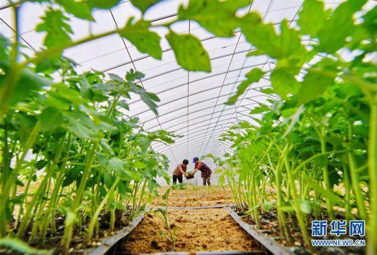 (经济)(1)河北滦州:发展集体经济 助推乡村振兴