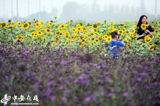 """合肥:中秋小长假徜徉""""四季花�!薄咀橥肌�"""