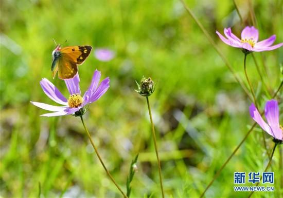 (美丽中国)(2)拉萨:金色池塘秋色美