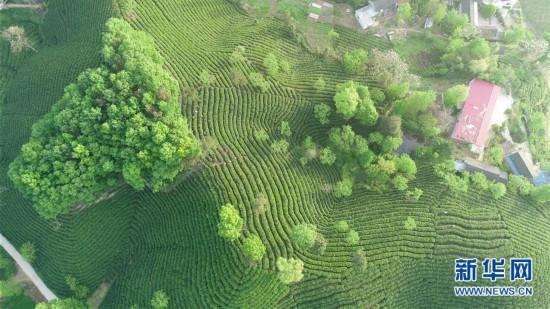 """(社会)(2)河南信阳:""""多彩田园""""铺就绿色发展之路"""