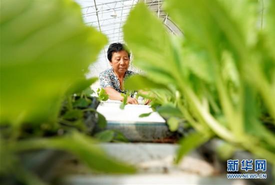 (社会)(1)河北滦州:设施农业促增收