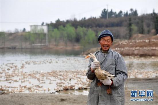 """(社会)(6)河南信阳:""""多彩田园""""铺就绿色发展之路"""