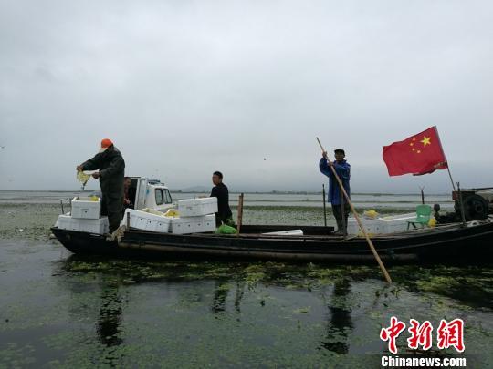 太湖水域媪楫情开始实行围网养殖