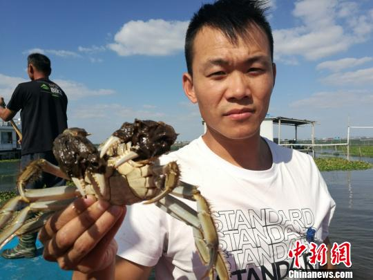 阳澄湖、太湖同日开捕大闸蟹环保压力促蟹农寻转型之路
