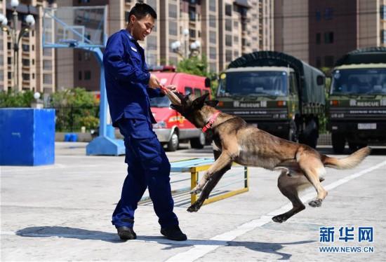 """(社会)(3)搜救犬""""巴特""""载誉归来"""