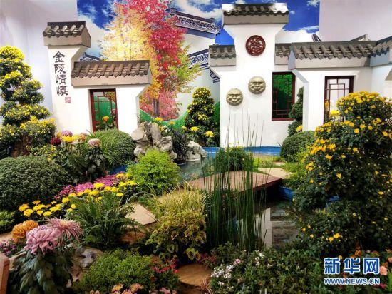 上千个中外菊花参赛作品亮相北京世园会