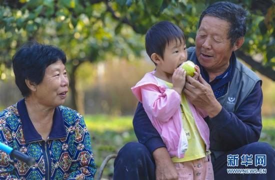 (经济)(1)河北永清:鸭梨飘香助农增收