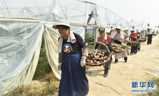 (经济)(1)山东邹平:黄河沿岸果飘香
