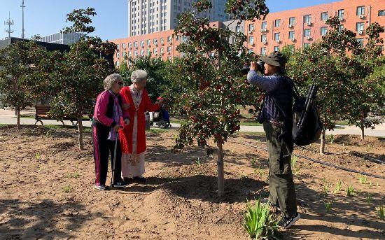 北京:重阳节700多名老人赴北七家镇快乐采摘