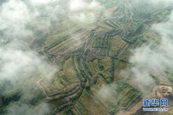 (环境)(3)河北临城:太行云海
