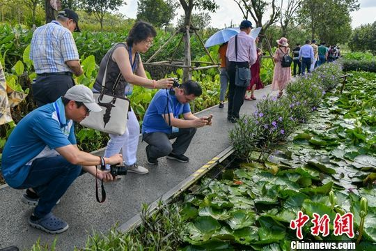 华文媒体高层人士参观海口凤翔湿地公园。骆云飞 摄