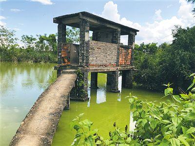 搭建在鱼塘上的澄迈吾录社区公厕大略脏臭排泄物和厕纸漂浮水面